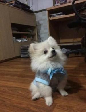 น้องน้ำเค็มในเสื้อสุนัข เสื้อหมา เสื้อน้องหมา เสื้อผ้าหมา เสื้อแมว เสื้อผ้าสุนัข เสื้อยืด ผ้าพันคอลายจุด สีฟ้า