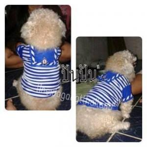 น้องปันปันในชุดเสื้อสุนัข เสื้อหมา เสื้อน้องหมา เสื้อผ้าหมา เสื้อแมว เสื้อผ้าสุนัข ชุดทหารเรือ สีน้ำเงิน