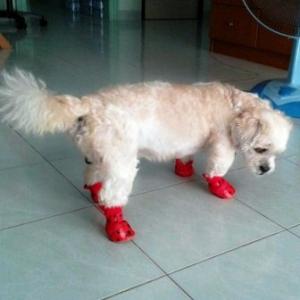 น้องพัสเตอร์กับรองเท้าสุนัข ลายรอยเท้าสุนัข สีแดง