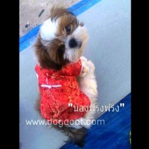 น้องฟุ้งฟริ้งกับเสื้อสุนัข เสื้อหมา เสื้อน้องหมา เสื้อผ้าหมา เสื้อแมว เสื้อผ้าสุนัข ชุดจีน สีแดง