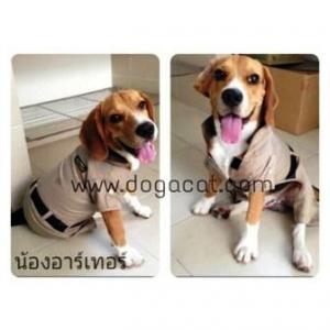 น้องอาร์เทอร์ ในชุดเสื้อสุนัข ชุดข้าราชการ