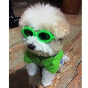 น้องแต่มแต๊มใส่แว่นสุนัข แว่นหมา แว่นน้องหมา แว่นแมว แฟนซี สีเขียว