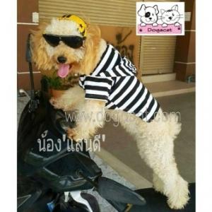 น้องแสนดีกับเสื้อสุนัข เสื้อหมา เสื้อน้องหมา เสื้อผ้าหมา เสื้อแมว เสื้อผ้าสุนัข ลายขวาง ขาวดำ