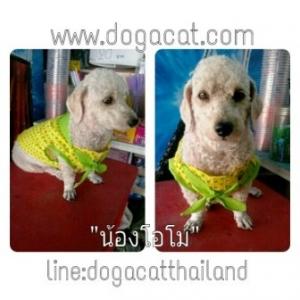 น้องโอโม่กับเสื้อสุนัข เสื้อหมา เสื้อน้องหมา เสื้อผ้าหมา เสื้อแมว เสื้อผ้าสุนัข ลายดาวแขนกุด สีเหลือง