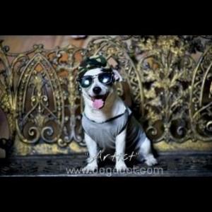 น้องArtistกับหมวกสุนัขมีหู หมวกหมามีหู หมวกน้องหมามีหู หมวกแมวมีหู ลายทหาร สีเขียว
