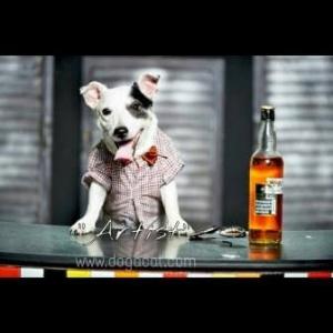 น้องArtistกับเสื้อสุนัข เสื้อหมา เสื้อน้องหมา เสื้อผ้าหมา เสื้อแมว เสื้อผ้าสุนัข สก๊อตเล็ก อินธนู โทนน้ำตาล