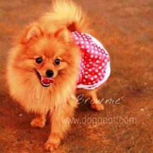 บราวนี่กับเสื้อสุนัข ชุดเดรส คอบัว ลายจุด สีแดง