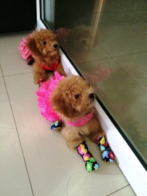 รีวิวตัวอย่างเสื้อสุนัข เสื้อหมา เสื้อน้องหมา เสื้อผ้าหมา เสื้อแมว เสื้อผ้าสุนัข เดรสสายคล้อง กระโปรงลายจุด สีชมพู