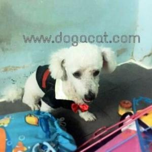 รีวิวจากทางบ้านในเสื้อสุนัข เสื้อน้องหมา เสื้อหมา เสื้อผ้าหมา เสื้อแมว เสื้อผ้าสุนัข ชุดทักซิโด้ชาย สูทดำ