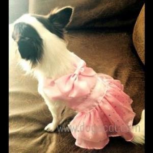 รีวิวเสื้อสุนัข เสื้อหมา เสื้อน้องหมา เสื้อผ้าหมา เสื้อแมว เสื้อผ้าสุนัข เดรสสายคล้องราตรี สีชมพู