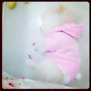 น้องลาเต้ในชุดเสื้อสุนัข ชุดกระต่าย สีชมพู
