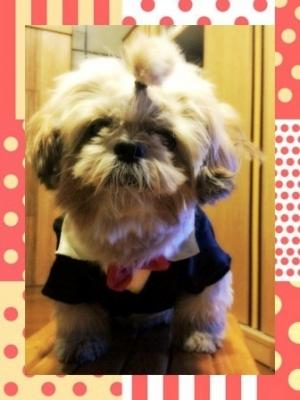 เสื้อสุนัข ชุดทักซิโด้ชาย สูทดำ byวัชระ