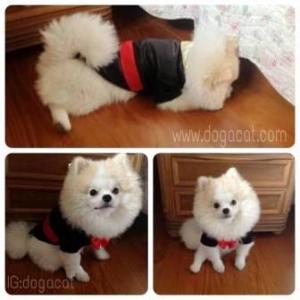 น้องข้าวกล้องในชุดเสื้อสุนัข ชุดทักซิโด้ชาย สูทดำ