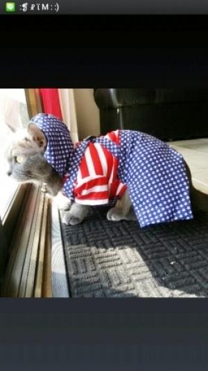 เสื้อสุนัข ชุดเอี๊ยมยืด Polka Dot ลายสหรัฐ byPim