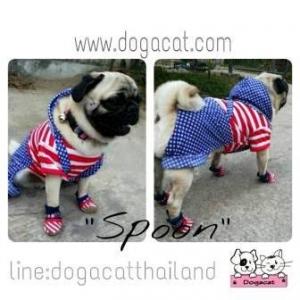 น้องสปูนในชุดเสื้อสุนัข ชุดเอี๊ยมยืด Polka Dot ลายสหรัฐ