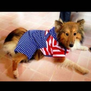 รีวิวเสื้อสุนัข ชุดเอี๊ยมยืด Polka Dot ลายสหรัฐ