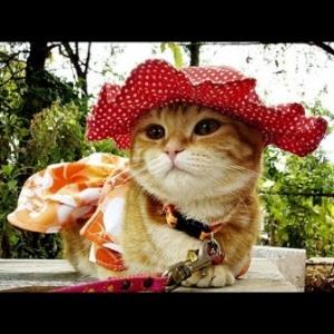 น้องส้มโอ ใส่หมวกสุนัข ทรงหมวกตุ๊กตา สีแดง