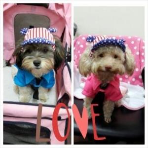 น้องลูกตาล น้องลัคกี้เสื้อสุนัข ชุดโปโล มีไทด์ อินธนู สีชมพู และหมวกสุนัขมีหู สหรัฐ