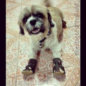 น้องมูมู่ รองเท้าสุนัข ลายทหารV2.