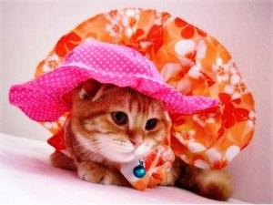 น้องส้มโอ หมวกสุนัข ทรงหมวกตุ๊กตา สีชมพู