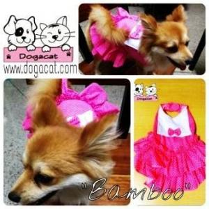 น้องแบมบูใส่ชุดเสื้อสุนัข เดรสสายคล้อง กระโปรงลายจุด สีชมพู