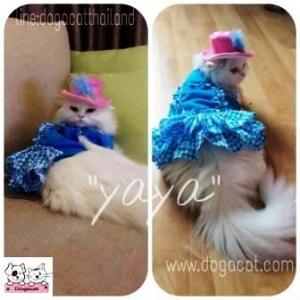 น้องญาญ่าใส่เสื้อสุนัข เดรสสีฟ้ากับหมวกสุนัข ทรงปีกบาน