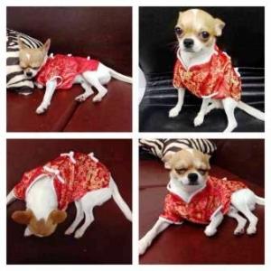 รีวิว เสื้อสุนัข ชุดจีน สีแดง