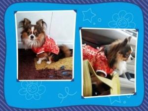 รีวิวจากทางบ้าน เสื้อสุนัข ชุดจีน สีแดง