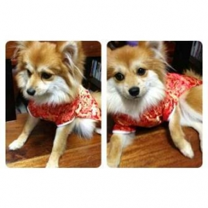 รีวิวจากลูกค้า เสื้อสุนัข ชุดจีน สีแดง