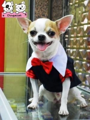 น้องสตางค์ เสื้อสุนัข ชุดนักเรียนอินเตอร์ ขอบแดง