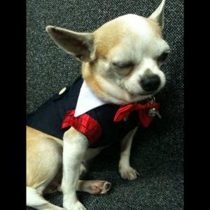 น้องลัคกี้ เสื้อสุนัข ชุดนักเรียนอินเตอร์ ขอบแดง