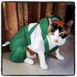 นางแบบ เสื้อสุนัข ชุดเอี๊ยมยืด Polka Dot ลายจุดเขียว