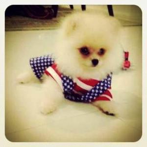 น้องลาเต้ ในชุดเสื้อสุนัข ชุดเอี๊ยมยืด Polka Dot ลายสหรัฐ