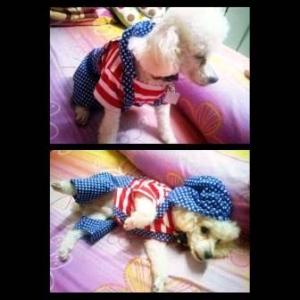 น้องไมโล เสื้อสุนัข ชุดเอี๊ยมยืด Polka Dot ลายสหรัฐ