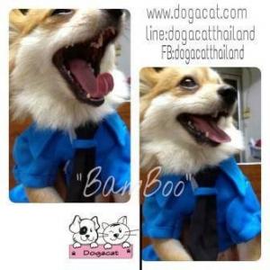 น้องแบมบู เสื้อสุนัข ชุดโปโล มีไทด์ อินธนู สีน้ำเงิน