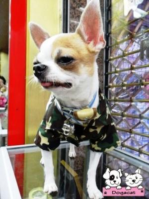 น้องสตางค์ เสื้อสุนัข เชิ๊ตทหาร สีเขียว