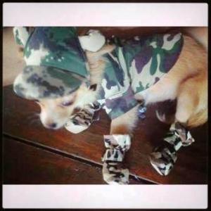 น้องหมูหยอง เสื้อสุนัข เชิ๊ตทหาร สีเขียว