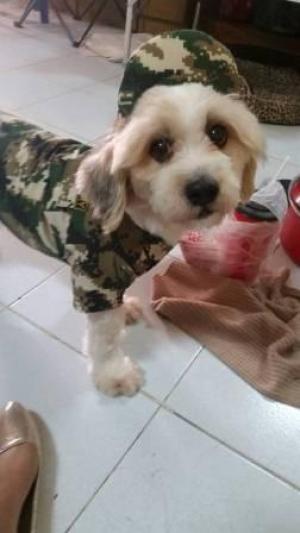 น้องโปกเกอร์กับ หมวกแกปสุนัข หมวกแกปหมา หมวกแกปน้องหมา หมวกแกปแมว ลายทหาร สีเขียว