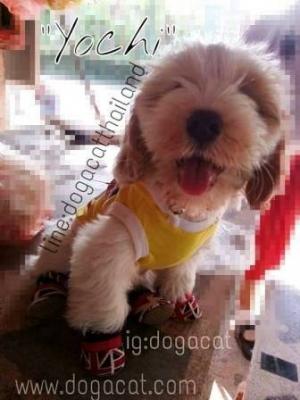 น้องโยชิ เสื้อสุนัข เสื้อยืด ลาย london สีเหลือง