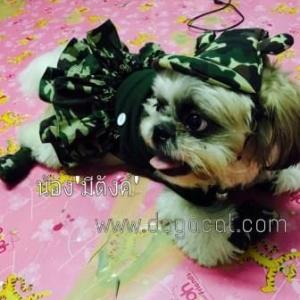 น้องมีตังส์ เสื้อสุนัข เสื้อหมา เสื้อน้องหมา เสื้อผ้าสุนัข เสื้อผ้าหมา เสื้อแมว ชุดเดรสทหาร กับหมวกสุนัข รองเท้าสุนัข