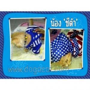 รีวิว เสื้อสุนัข เสื้อหมา เสื้อน้องหมา เสื้อผ้าหมา เสื้อแมว เสื้อผ้าสุนัข ชุดเอี๊ยมยืด Polka Dot ลายสหรัฐ