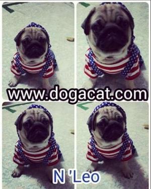 น้องลีโอใส่เสื้อสุนัข เสื้อหมา เสื้อน้องหมา เสื้อผ้าหมา เสื้อแมว เสื้อผ้าสุนัข ชุดเอี๊ยมยืด Polka Dot ลายสหรัฐ