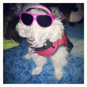 คุกกี้ แว่นสุนัข หมวกกันน็อคสุนัข สีชมพู