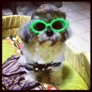 น้องถ้วยฟู แว่นสุนัข แฟนซี สีเขียว