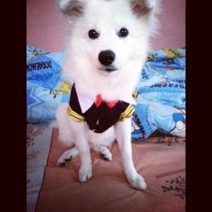น้องฮีโร่ ในชุดเสื้อสุนัข ชุดนักเรียนอินเตอร์