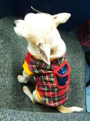 lucky เสื้อสุนัข เสื้อยืดสก๊อต มีเป้ สีแดง