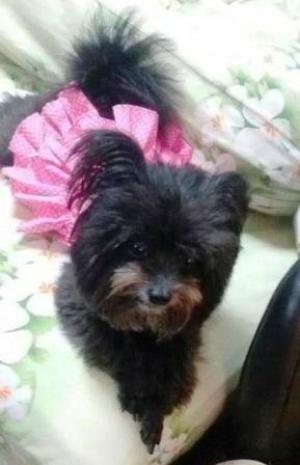 review ในชุดเสื้อสุนัข เดรสสายคล้อง กระโปรงลายจุด สีชมพู