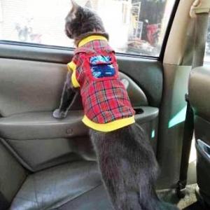 reviews น้องแมวเสื้อสุนัข เสื้อยืดสก๊อต มีเป้ สีแดง