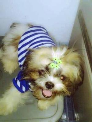 reviews เสื้อสุนัข ชุดทหารเรือ สีน้ำเงิน