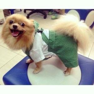 reviews เสื้อสุนัข ชุดเอี๊ยมยืด Polka Dot ลายจุดเขียว
